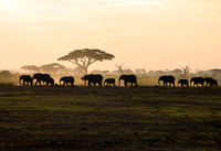 Elephants silhoutted in Tanzania dusk